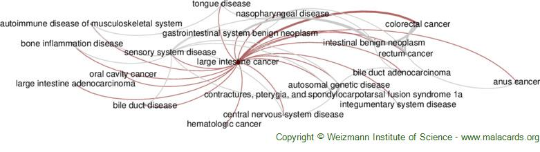 Diseases related to Large Intestine Cancer