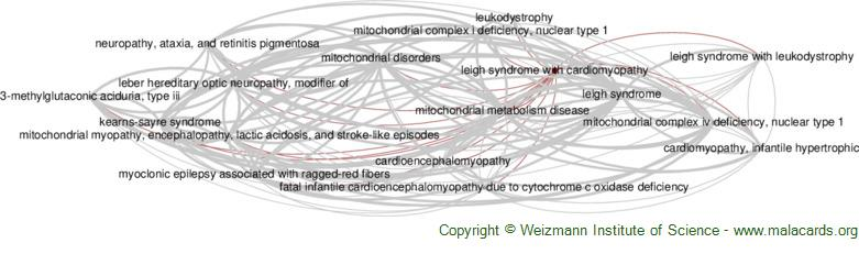 Diseases related to Leigh Syndrome with Cardiomyopathy