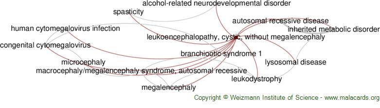 Diseases related to Leukoencephalopathy, Cystic, Without Megalencephaly
