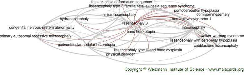 Diseases related to Lissencephaly 3