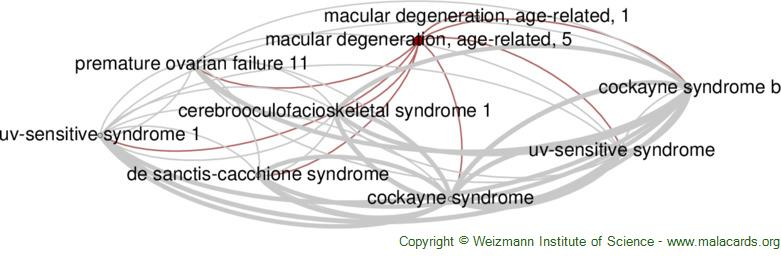 Diseases related to Macular Degeneration, Age-Related, 5