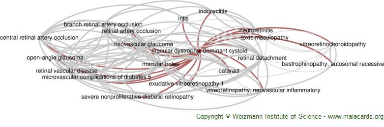 Diseases related to Macular Dystrophy, Dominant Cystoid