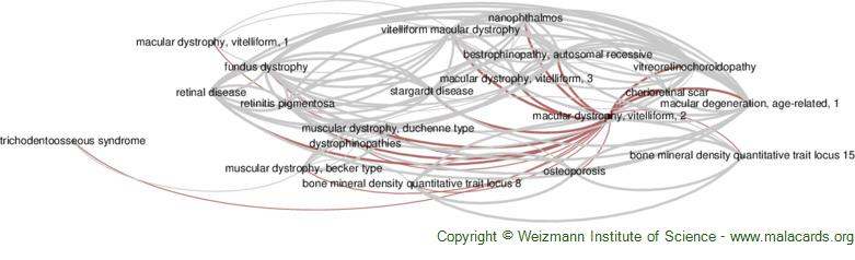 Diseases related to Macular Dystrophy, Vitelliform, 2