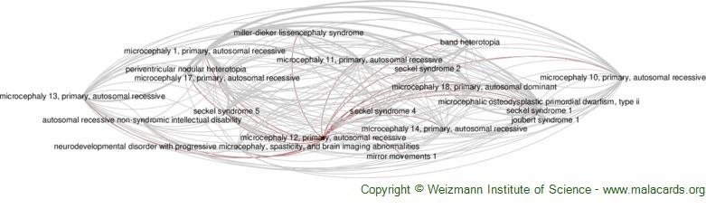 Diseases related to Microcephaly 12, Primary, Autosomal Recessive