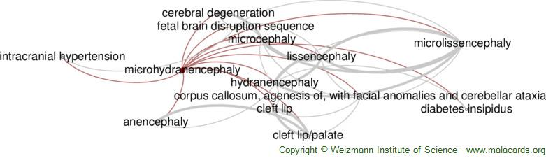 Diseases related to Microhydranencephaly