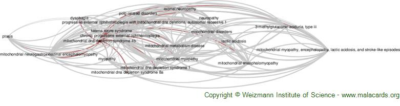 Diseases related to Mitochondrial Dna Depletion Syndrome 4b