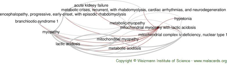 Diseases related to Mitochondrial Myopathy with Lactic Acidosis