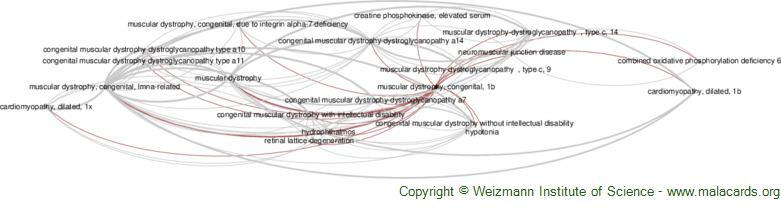 Diseases related to Muscular Dystrophy, Congenital, 1b