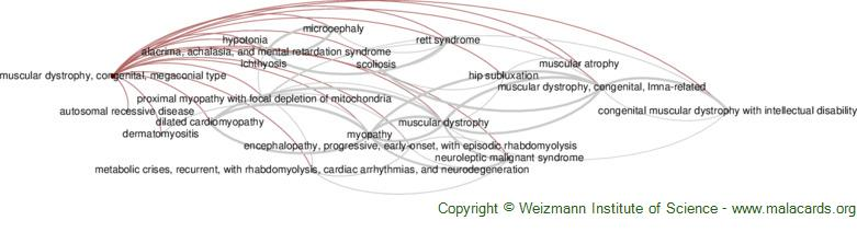 Diseases related to Muscular Dystrophy, Congenital, Megaconial Type