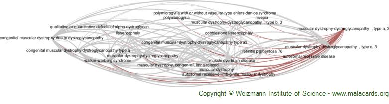 Diseases related to Muscular Dystrophy-Dystroglycanopathy  , Type a, 3