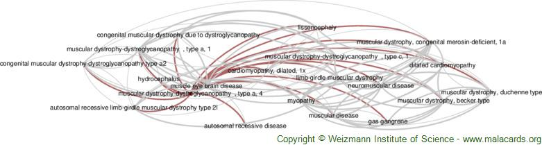 Diseases related to Muscular Dystrophy-Dystroglycanopathy  , Type a, 4