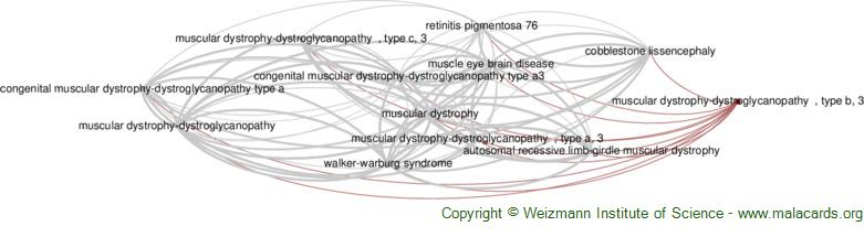 Diseases related to Muscular Dystrophy-Dystroglycanopathy  , Type B, 3