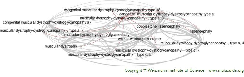 Diseases related to Muscular Dystrophy-Dystroglycanopathy  , Type a, 8