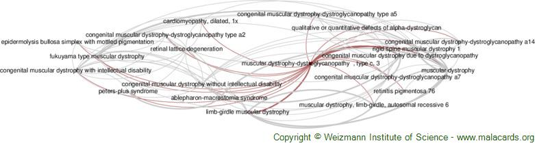 Diseases related to Muscular Dystrophy-Dystroglycanopathy  , Type C, 3