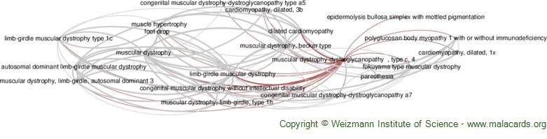 Diseases related to Muscular Dystrophy-Dystroglycanopathy  , Type C, 4