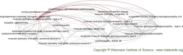 Diseases related to Muscular Dystrophy-Dystroglycanopathy  , Type C, 9
