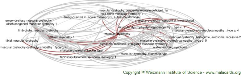 Diseases related to Muscular Dystrophy