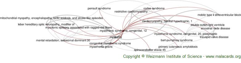 Diseases related to Myasthenic Syndrome, Congenital, 12