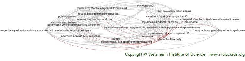 Diseases related to Myasthenic Syndrome, Congenital, 19