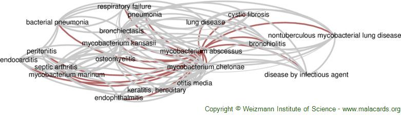 Diseases related to Mycobacterium Abscessus
