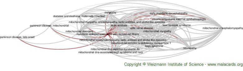 Diseases related to Myoclonic Epilepsy Associated with Ragged-Red Fibers