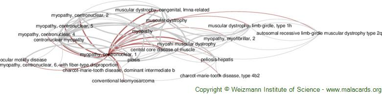 Diseases related to Myopathy, Centronuclear, 1