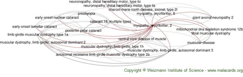 Diseases related to Myopathy, Myofibrillar, 2