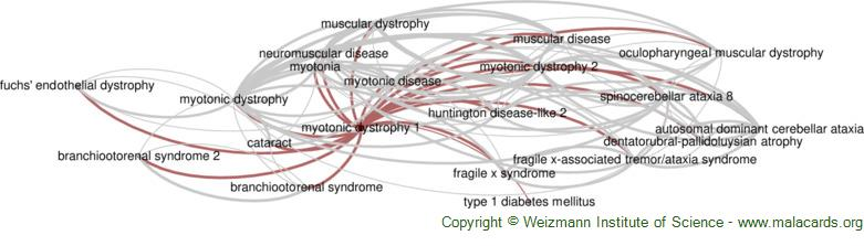 Diseases related to Myotonic Dystrophy 1