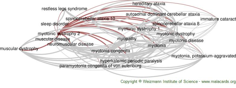 Diseases related to Myotonic Dystrophy 2
