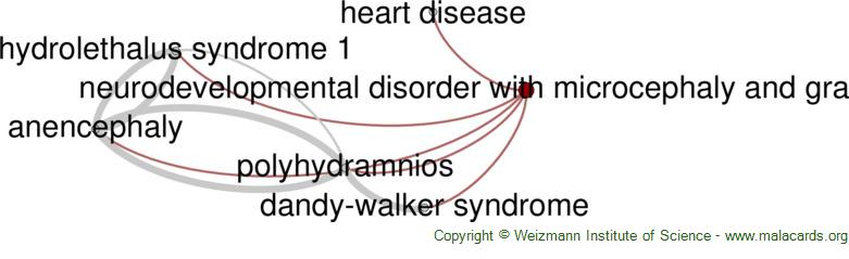 Diseases related to Neurodevelopmental Disorder with Microcephaly and Gray Sclerae