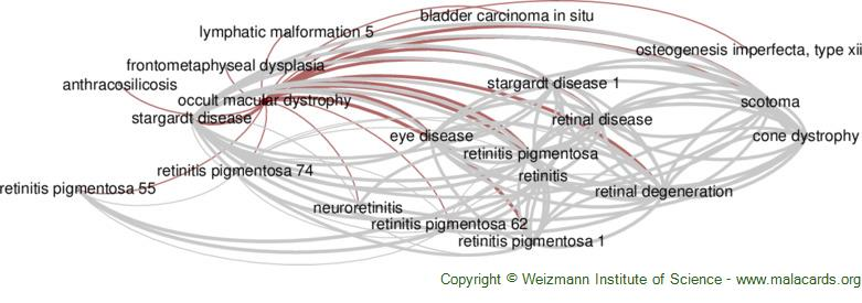 Diseases related to Occult Macular Dystrophy