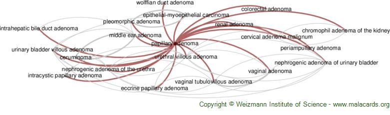 Diseases related to Papillary Adenoma