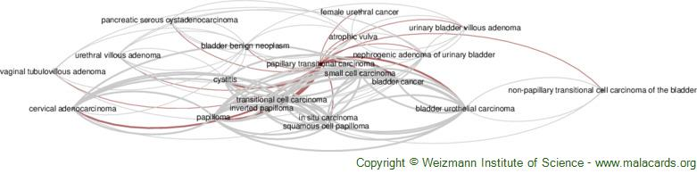 Diseases related to Papillary Transitional Carcinoma