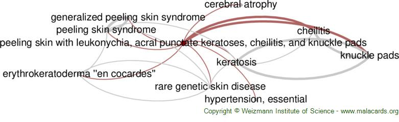 Diseases related to Peeling Skin with Leukonychia, Acral Punctate Keratoses, Cheilitis, and Knuckle Pads