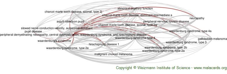 Diseases related to Peripheral Demyelinating Neuropathy, Central Dysmyelination, Waardenburg Syndrome, and Hirschsprung Disease