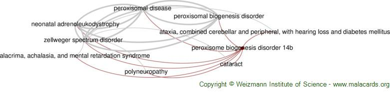 Diseases related to Peroxisome Biogenesis Disorder 14b