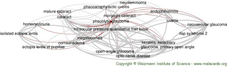 Diseases related to Phacolytic Glaucoma