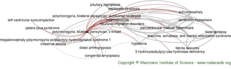Diseases related to Polymicrogyria, Bilateral Perisylvian, X-Linked