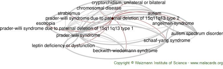 Diseases related to Prader-Willi Syndrome Due to Paternal Deletion of 15q11q13 Type 2
