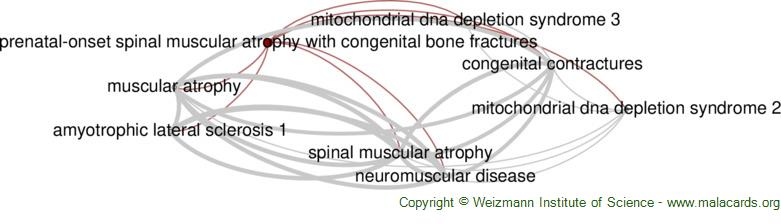 Diseases related to Prenatal-Onset Spinal Muscular Atrophy with Congenital Bone Fractures