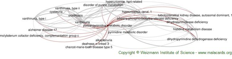 Diseases related to Purine-Pyrimidine Metabolic Disorder