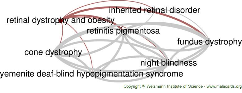 Diseases related to Retinal Dystrophy and Obesity