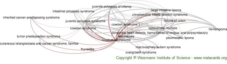 Diseases related to Ruvalcaba Syndrome