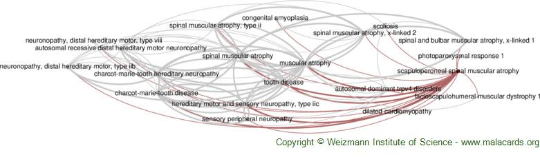 Diseases related to Scapuloperoneal Spinal Muscular Atrophy