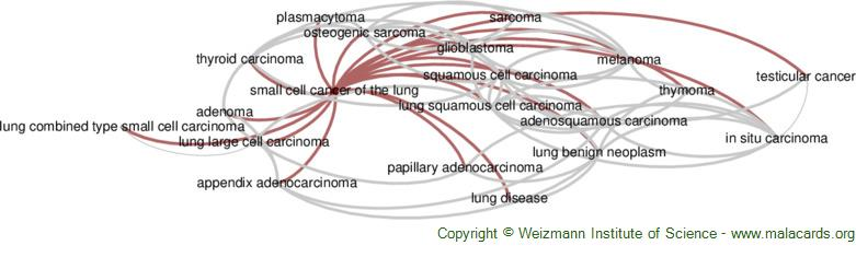Diseases related to Small Cell Cancer of the Lung