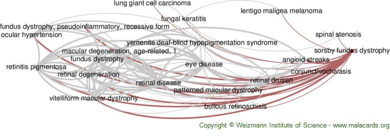 Diseases related to Sorsby Fundus Dystrophy