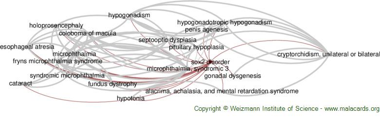 Diseases related to Sox2 Disorder