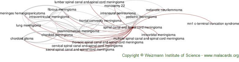 Diseases related to Spinal Canal and Spinal Cord Meningioma