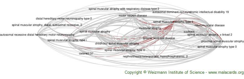 Diseases related to Spinal Muscular Atrophy, Type Ii