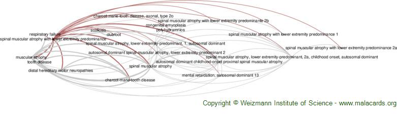 Diseases related to Spinal Muscular Atrophy with Lower Extremity Predominance